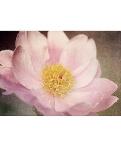 Dawn Leblanc, Peony in the Park