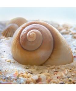Donna Geissler, Beach Shell IV
