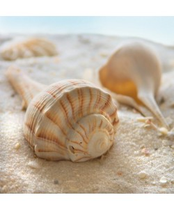 Donna Geissler, Beach Shell III