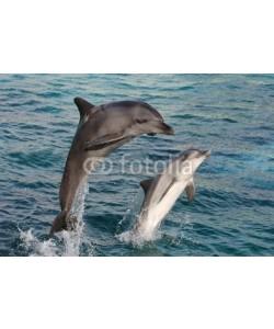 Duncan Noakes, Dolphin Bow Jump