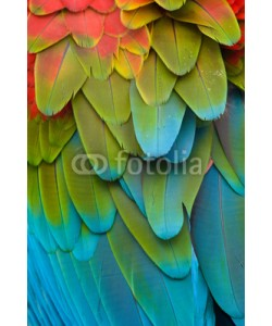 Eduardo Rivero, Colorful Macaw Plumage