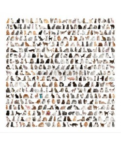 Eric Isselée, Large group of 471 cats breeds in front of a white background