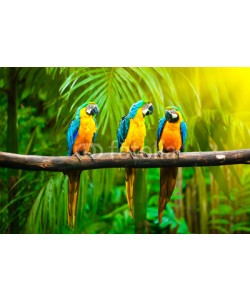 f9photos, Blue-and-Yellow Macaw