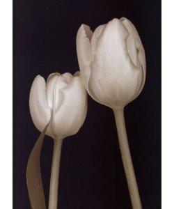 Fabregat Prades, Bora Bora Flower III