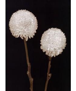 Fabregat Prades, Bora Bora Flower IV