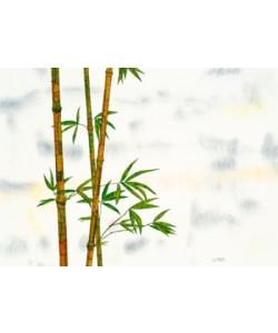 Michael Ferner, Bambus