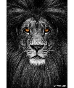 Baranov, Portrait of a Beautiful lion, lion in dark