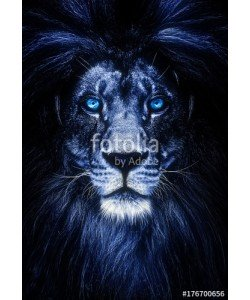 Baranov, Portrait of a Beautiful lion, lion with icy eyes