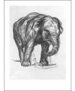 Franz MARC, Elefant,1907