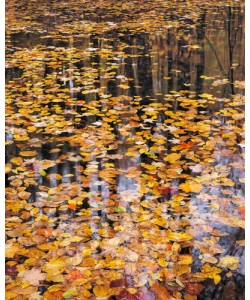 John Gavrilis, Autumn Detail
