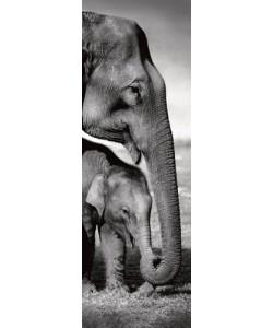 Gavriel Jecan, Indian Elephants