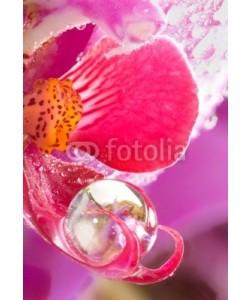 Gerhard Seybert, Orchidee Close-Up mit Wassertropfen