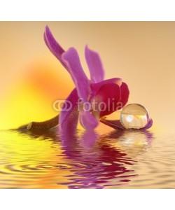 Gerhard Seybert, Orchidee auf Stein mit Wassertropfen