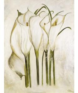 Gerstner Heidi, White Callas