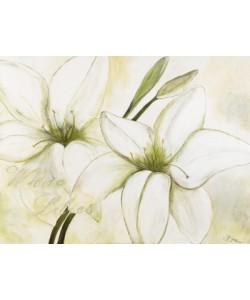 Gerstner Heidi, White Lilies