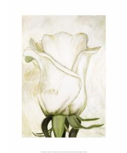Gerstner Heidi, White Roses I