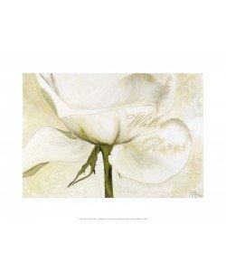 Gerstner Heidi, White Roses II