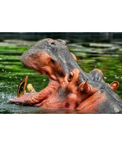 Hady Khandani, HIPPO