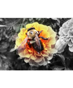 Hady Khandani, COLORSPOT - BUMBLE BEE
