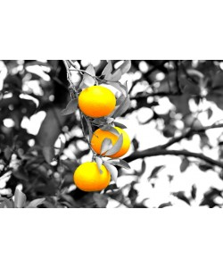 Hady Khandani, COLORSPOT - ORANGE TREE