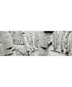 Helmut Hirler, Dixie National Forest - Utah - USA