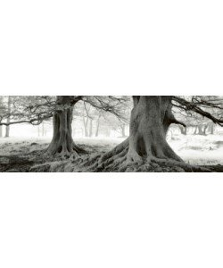 Helmut Hirler, Exmoor - Devon - England