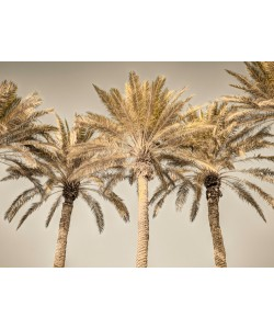 Assaf Frank, Palm Trees I