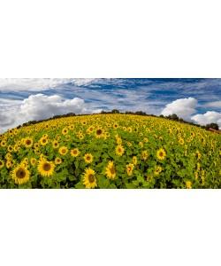 Rolf Fischer, Sonnenblumenwelt