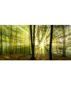 Rolf Fischer, Nebelstimmung mit Sonne im Wald