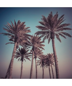 Assaf Frank, Palm Trees