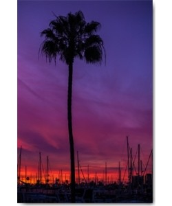 Tom Lichtenwalter, Sunset Sailing