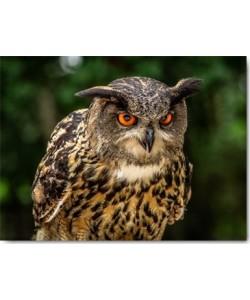 Ronin, OE Oe Owl