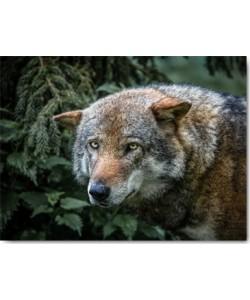 Ronin, Lone Wolf