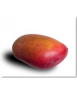 Volker Brosius, Mango