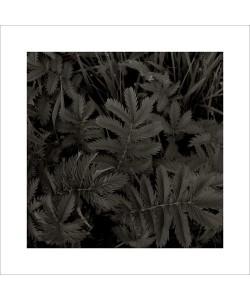 Jacky LECOUTURIER, Plantes, 2004
