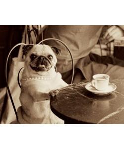 Jim Dratfield, Cafe Pug