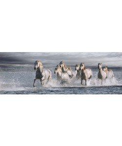 Jorge Llovet, Horses Running at the Beach