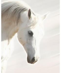 Kari Brooks, Pegasus III