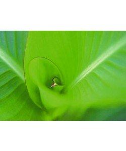 Ortwin Klipp, Leaf 2