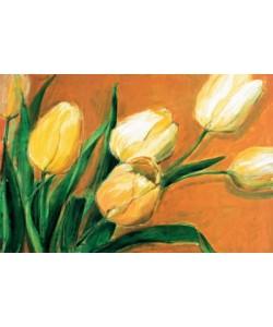 Elisabeth Krobs, Tulipa Nova