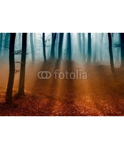 lacabetyar, Dark autumn forest with the first light of the sun.
