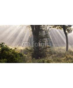 lacabetyar, Mystical forest
