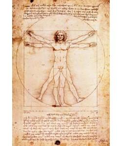Leonardo da Vinci, Proportionszeichnung nach Vitruv