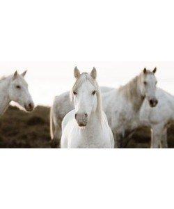 Jorge Llovet, Horse Meeting