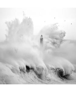 Marina Cano, Birds in the Storm