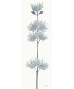 Katja Marzahn, WHITE FLOWER