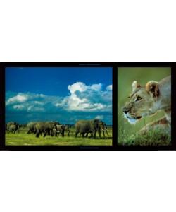 Michel & Christine Denis-Huot, Elephants and Lioness