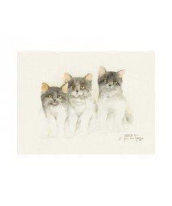 Dede Moser, Cats Of Distinction III