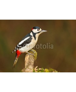 natureimmortal, Greater spotted woodpecker on mossy branch