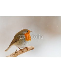 natureimmortal, Robin in winter